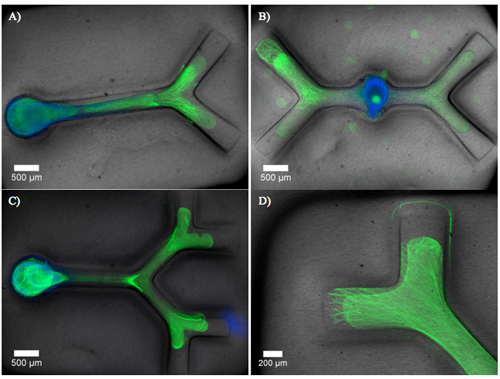 amorphous hydrogels. calcium alginate hydrogels; amorphous hydrogels. dual hydrogel constructs.