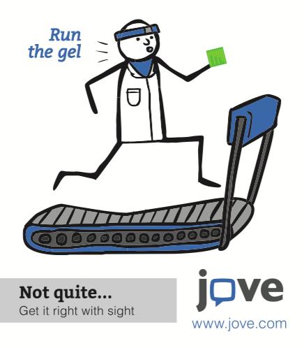 JoVE Journal Run the Gel