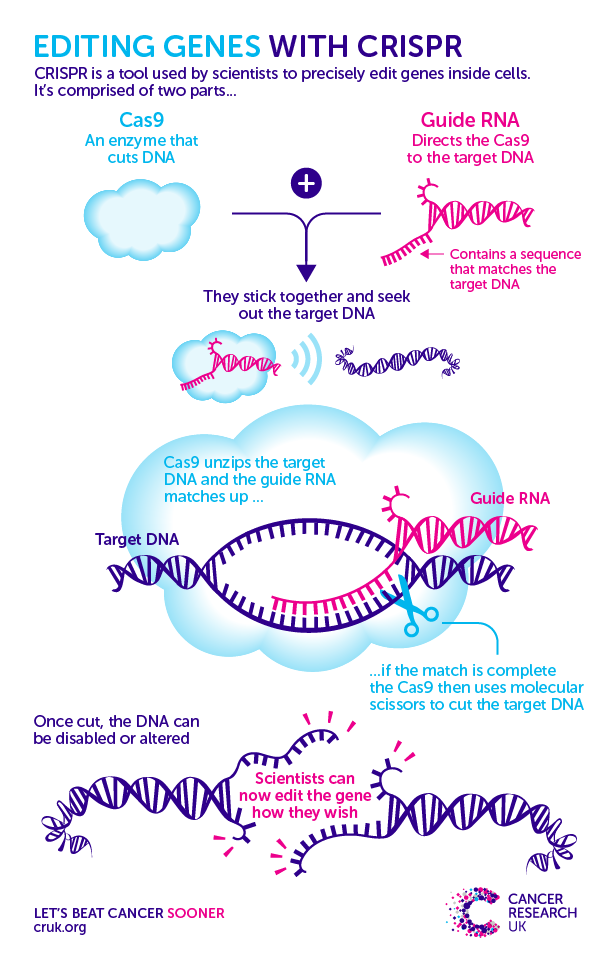 The CRISPR-Cas9 tool allows researchers to perform genetic engineering experiments that could potentially lead to tremendous advances in medical research, agriculture, biochemistry, and more.