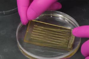 Manipulating Gene Function in Cavefish