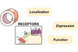 Current Methods for Membrane Receptor Probing in the Vascular System