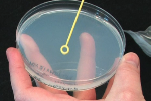 Biology I: Yeast, Drosophila, and C. elegans